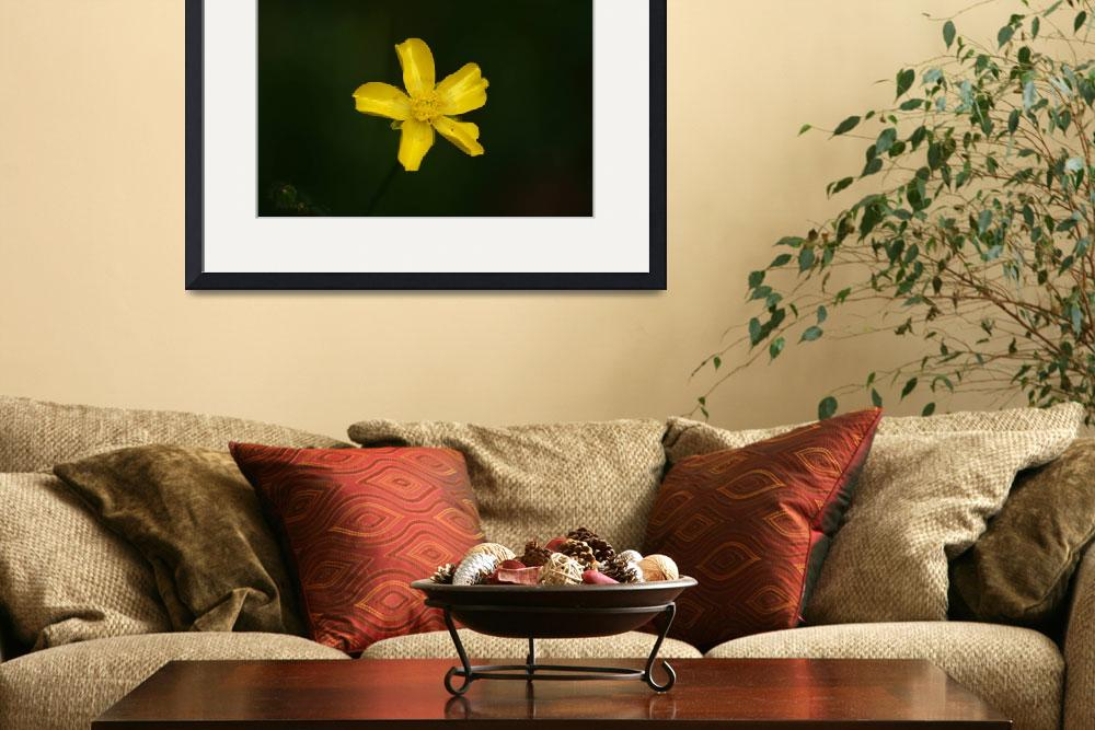 """""""Yellow flower&quot  by DPWphotography"""