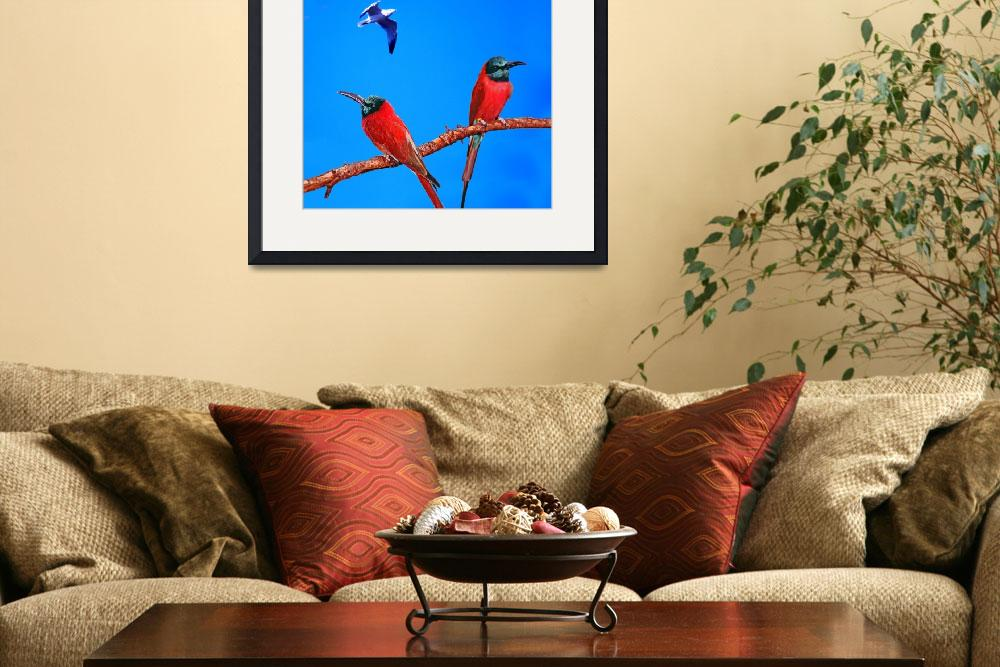 """""""Red African Bee Eaters""""  (2006) by frankreggio"""