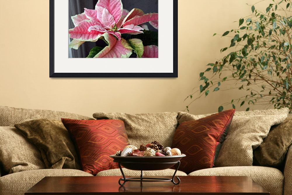 """Poinsettia Flower Pink and White 2&quot  (2010) by KsWorldArt"