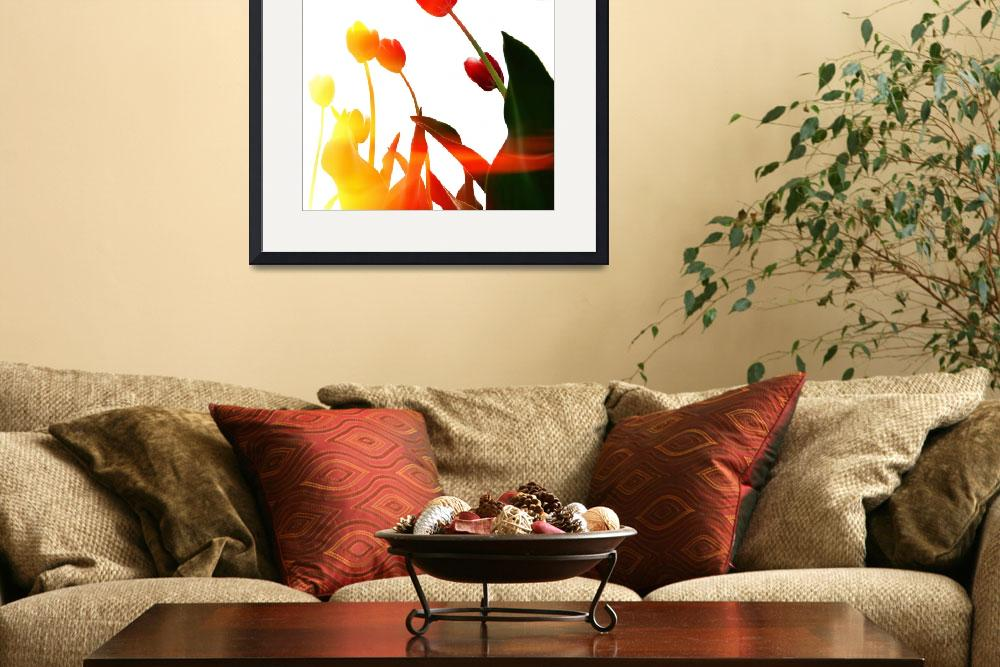 """""""Tulip Time&quot  by Michelle1991"""