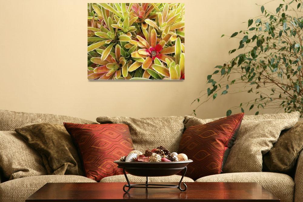 """Hawaii, Maui, Cluster Of Colorful Bromeliad Plants""  by DesignPics"