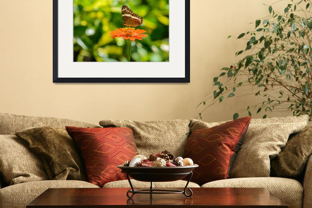 """""""Banded Peacock Butterfly & Zinnia&quot  by PronghornPix"""