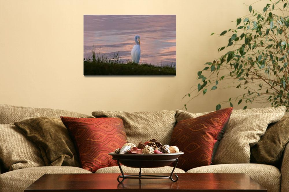 """Great Egret at Sunrise""  by GrandmaDee"