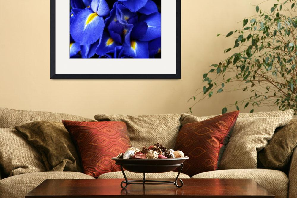 """Iris Abstract&quot  (2009) by JessicaJenney"