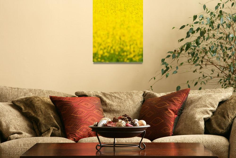 """""""Field of Yellow&quot  (2011) by redfibres"""