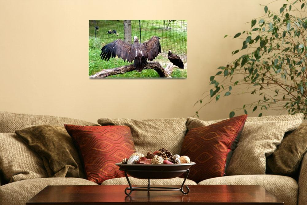 """""""Vulture Pride""""  (2009) by Kimmary"""