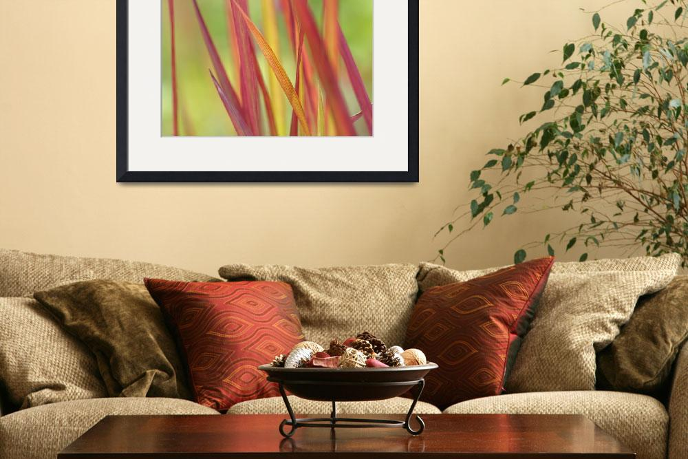 """""""Red winter grass&quot  (2010) by CoraNiele"""