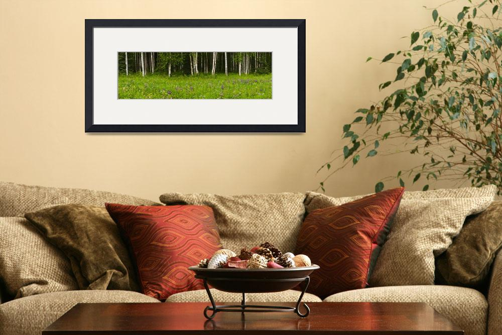 """""""Scenic view of a Birch forest and Lupine meadow, E&quot  by DesignPics"""