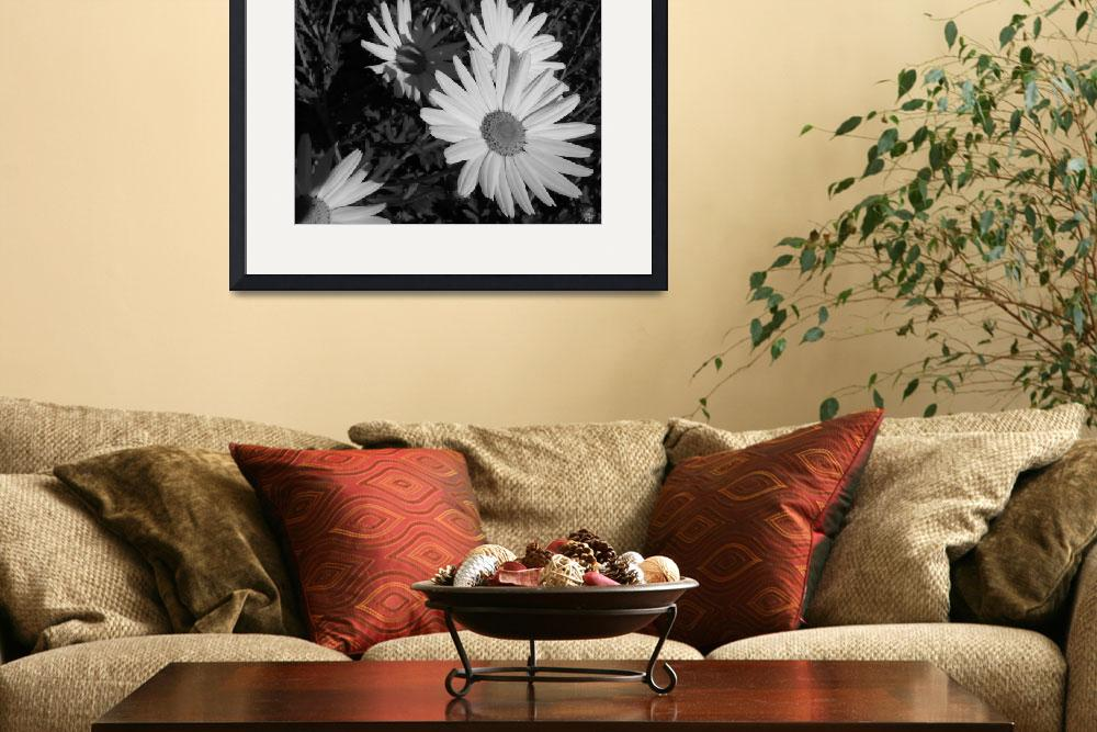 """""""White daisies at dusk&quot  (2009) by liv-ellingsen"""