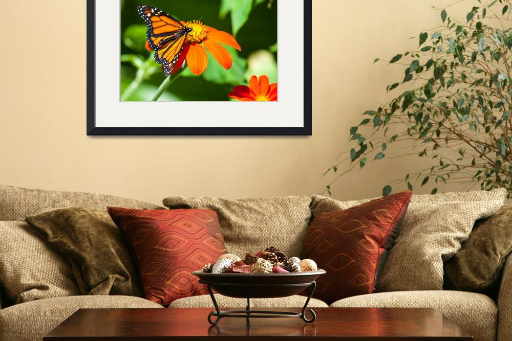 """Monarch Butterfly&quot  by johncorney"