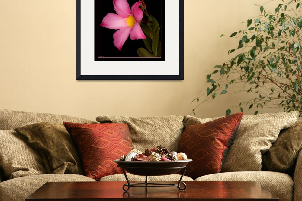 """""""Mandevilla&quot  (2009) by keenfineart"""