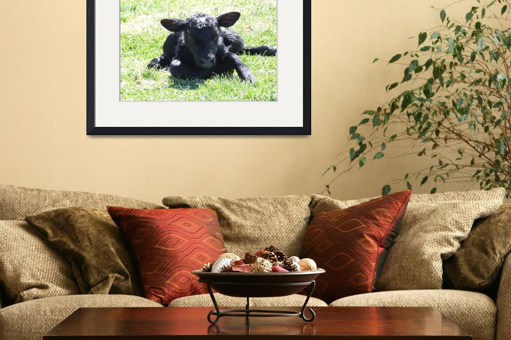 """""""New born calf""""  (2009) by Hartphotography"""