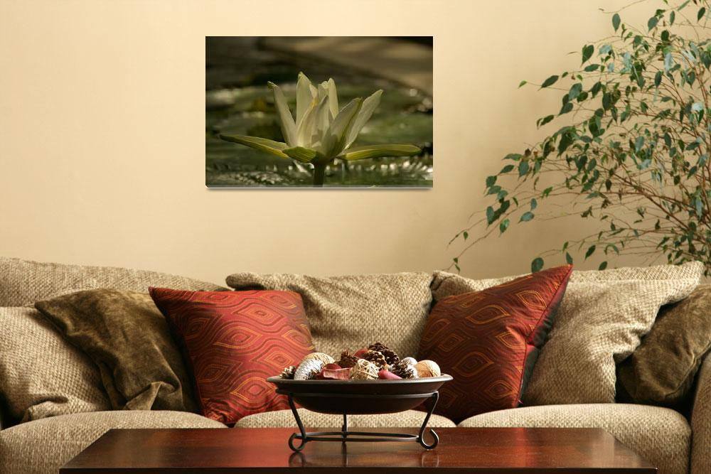 """White Lotus""  (2010) by mellting"