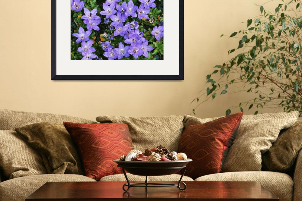 """""""Pipers Bell Flower In Bloom (Campanula Piperi)&quot  by Panoramic_Images"""