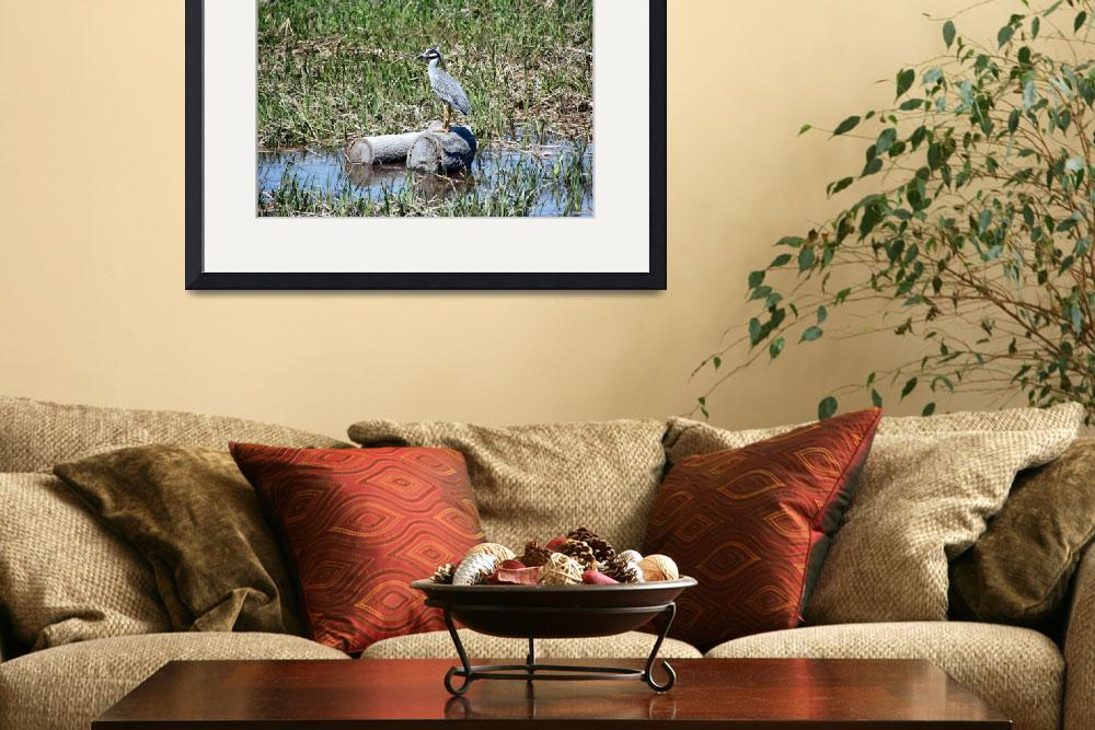 """""""Yellow-Crowned Night Heron&quot  by CynthiaHickman"""