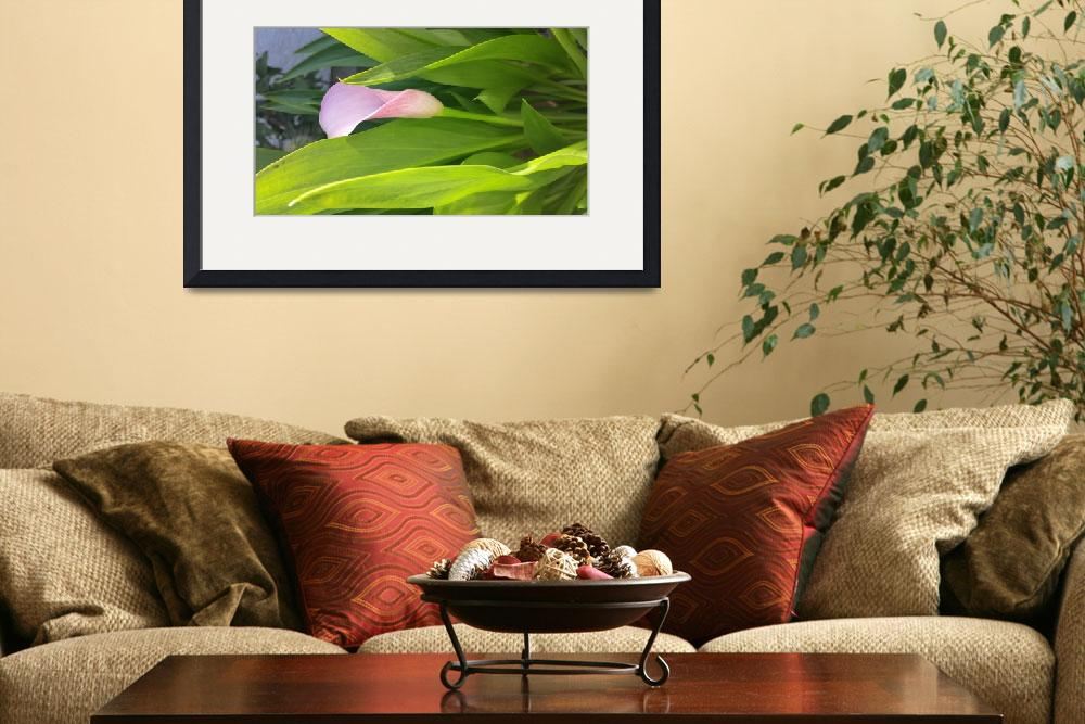 """""""Calla Lily&quot  (2013) by OnTheRoadPhotographer"""