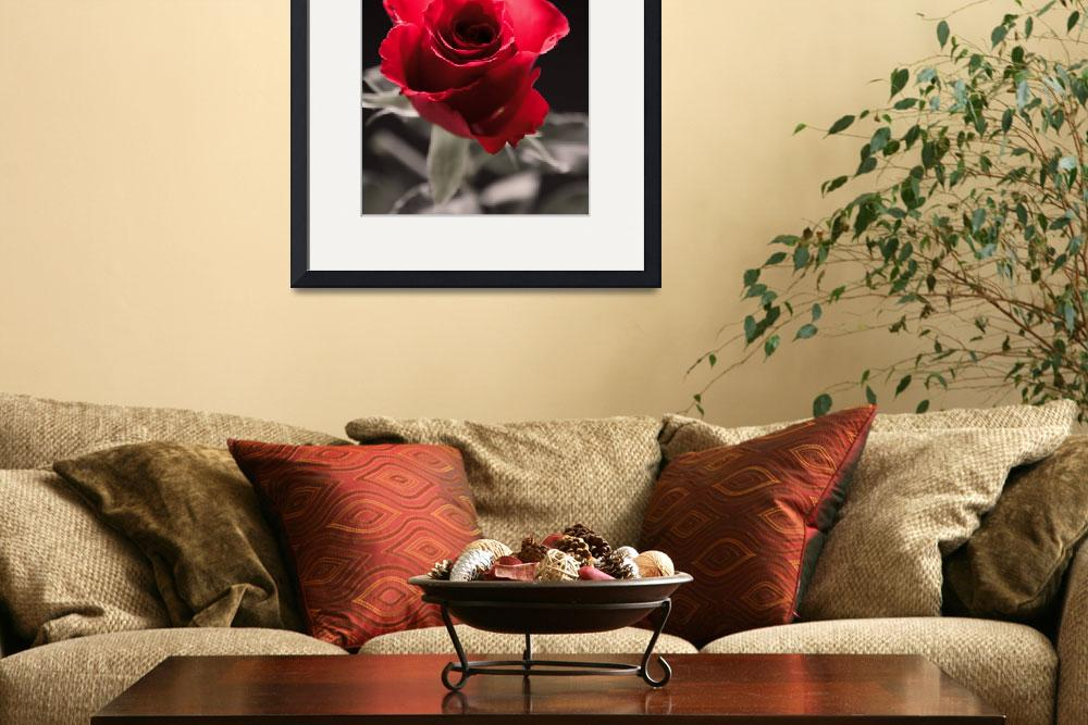 """""""Roses are Red""""  (2011) by JeremySage"""