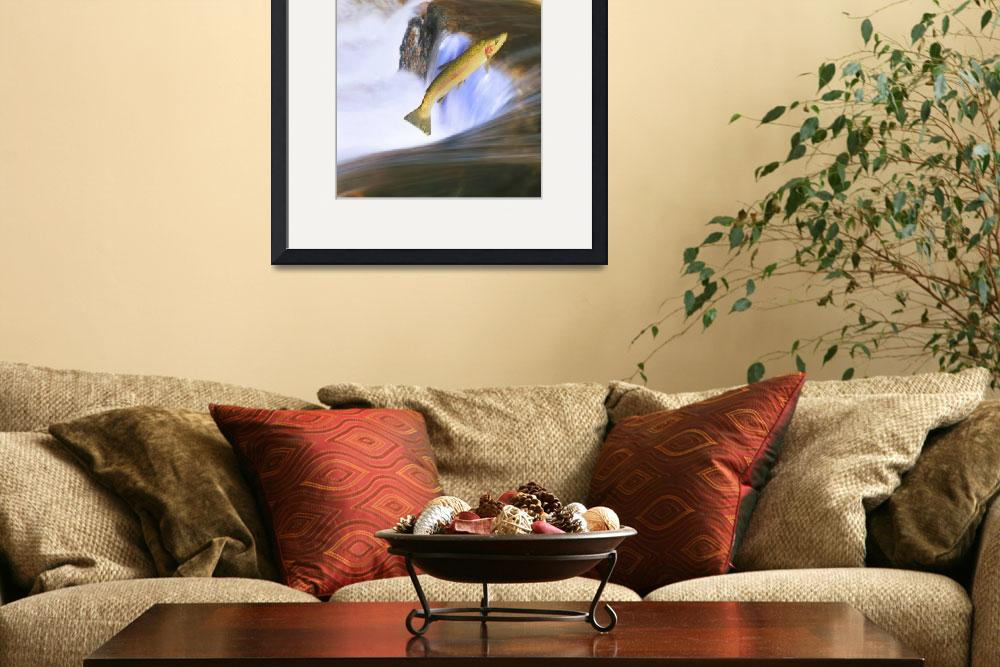 """""""Migrating Steelhead Salmon Leaping Over Falls, Can&quot  by DesignPics"""