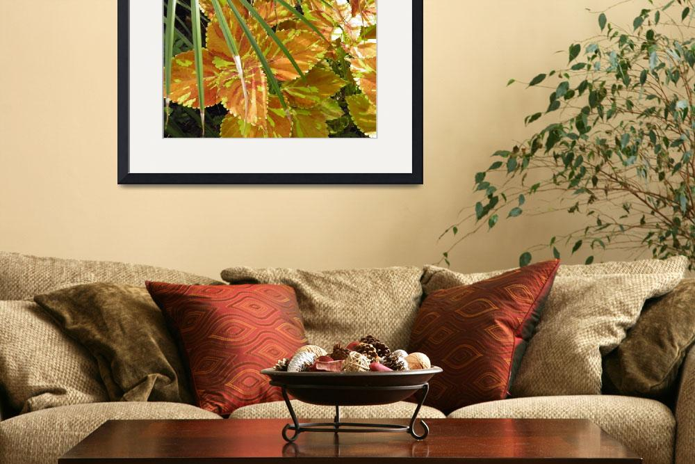 """""""yellow orange and green leaves""""  by sb1photography"""