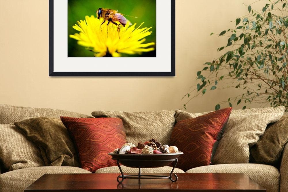 """Bee On A Yellow Flower In Spring&quot  (2010) by dc-photography"
