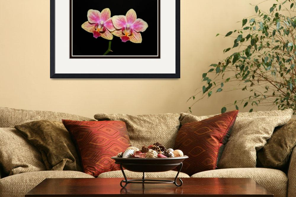 """""""Phalaenopsis or Moth Orchid&quot  by chloescorner"""