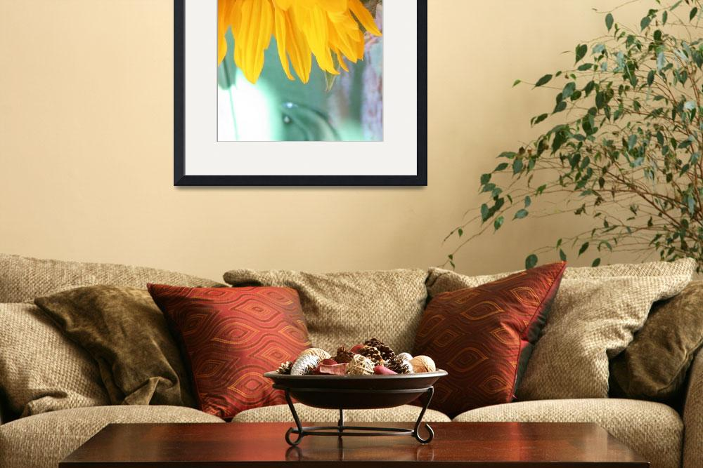 """""""sunflower 1&quot  by claireburke"""