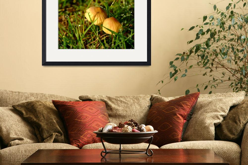 """""""Two Toadstools in the Dew&quot  by Serena"""
