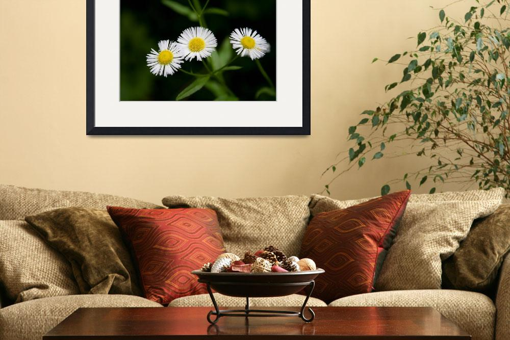 """Flowers Wildflower Daisy like&quot  (2010) by greatcaptures"