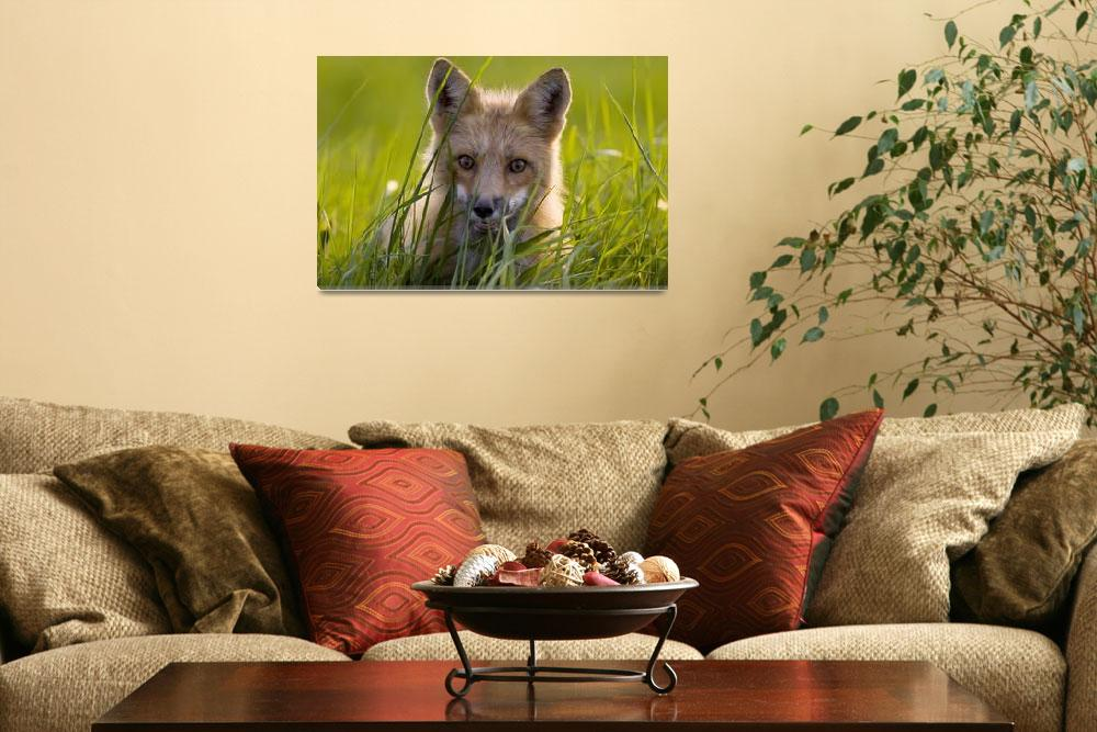 """Red Fox, Prince Edward Island, Canada&quot  by DesignPics"