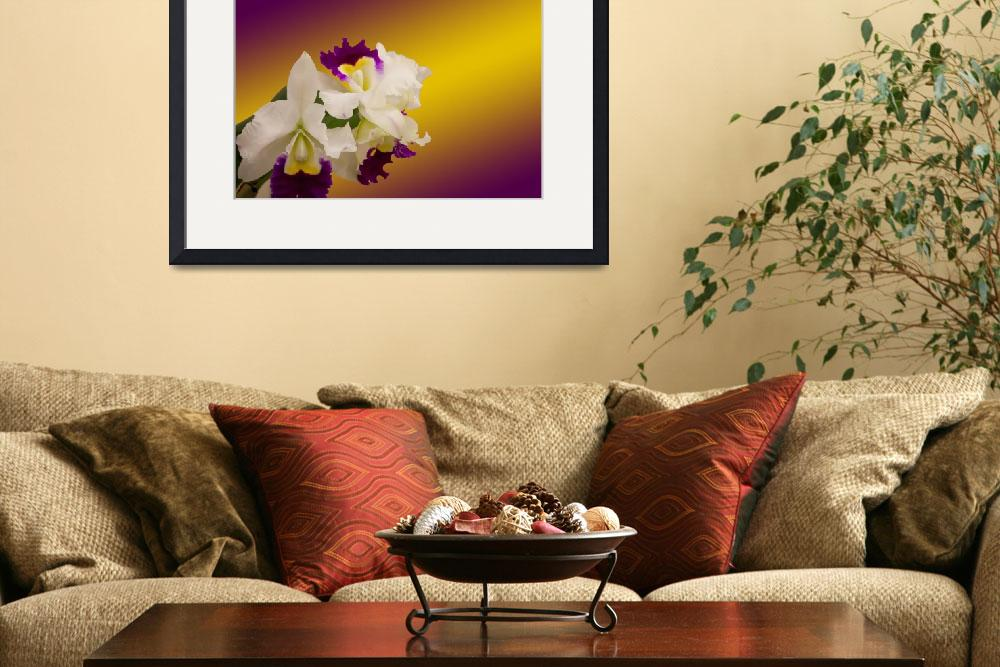 """""""Cattleya Alliance, Orglades Grand Ya Chang Beauty&quot  (2012) by debsmemories"""