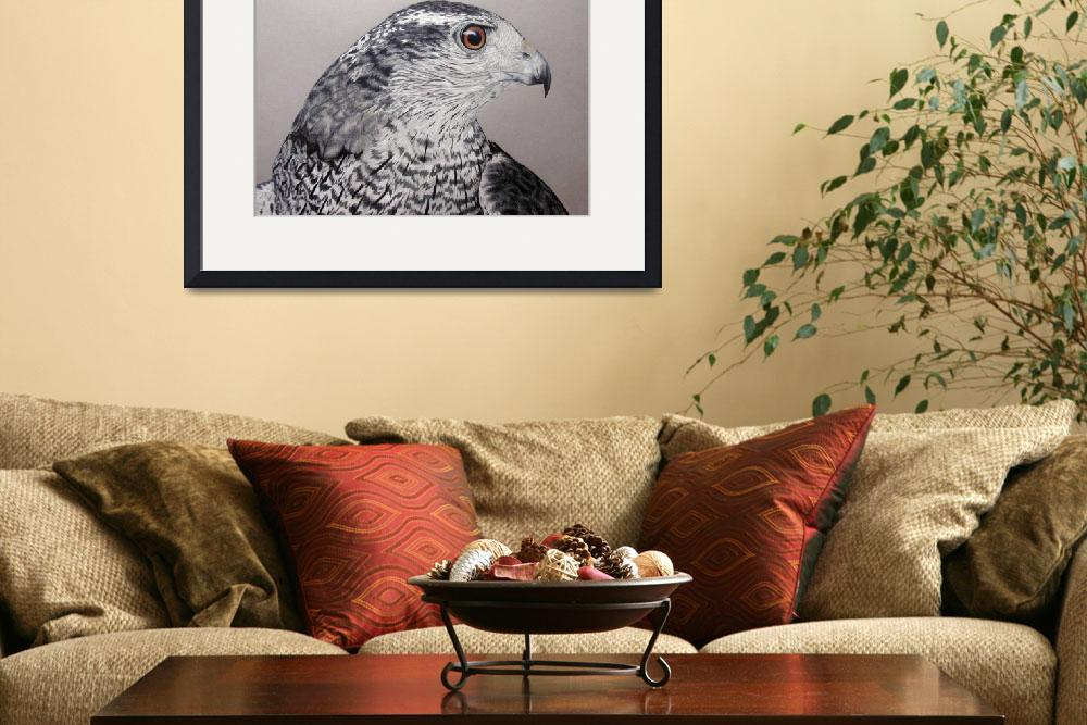 """""""Northern Goshawk&quot  by aart2000"""