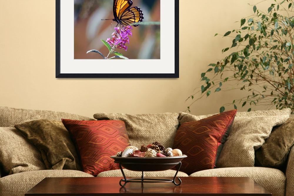 """""""Butterfly  Viceroy&quot  (2011) by KsWorldArt"""