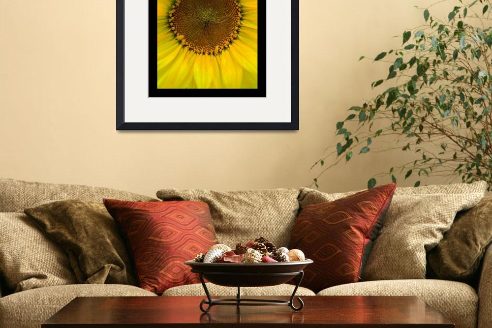 """Sunflower Shining""  (2012) by timdressler"