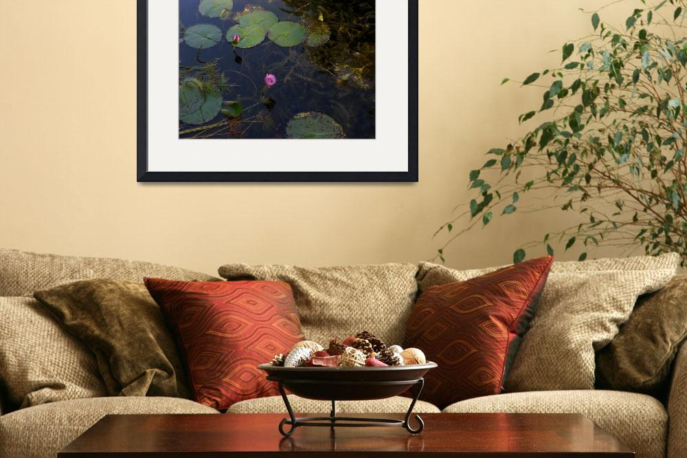 """""""Water Lilies""""  (2010) by ChrisCrowley"""