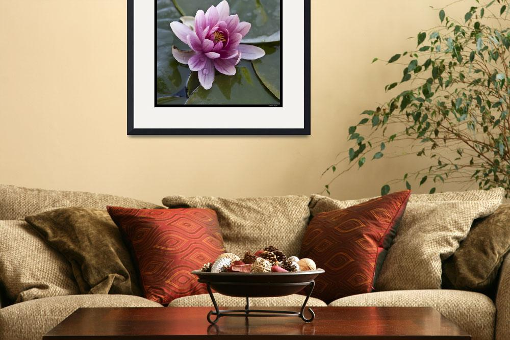 """""""Water lily&quot  (2011) by Melani"""