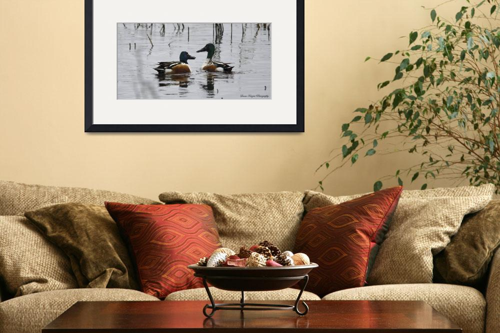 """Northern Shovelers&quot  (2013) by WildAboutNaturePhotography"