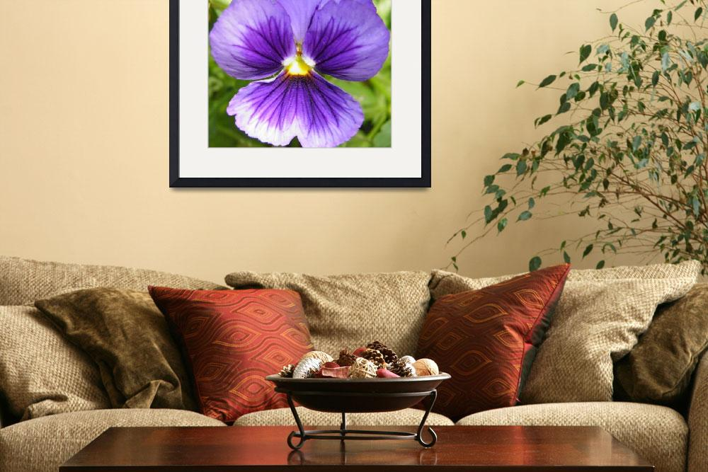 """""""purple and white flower 1&quot  (2010) by sb1photography"""