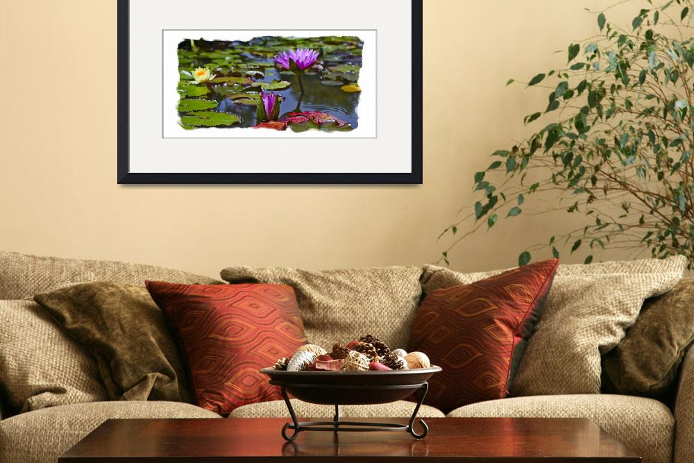 """""""Pink Water Liliy Panorama&quot  (2008) by johncorney"""