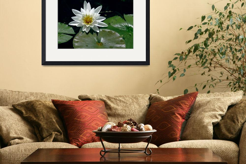 """""""WaterLilly_0273A&quot  by graphicphotography"""