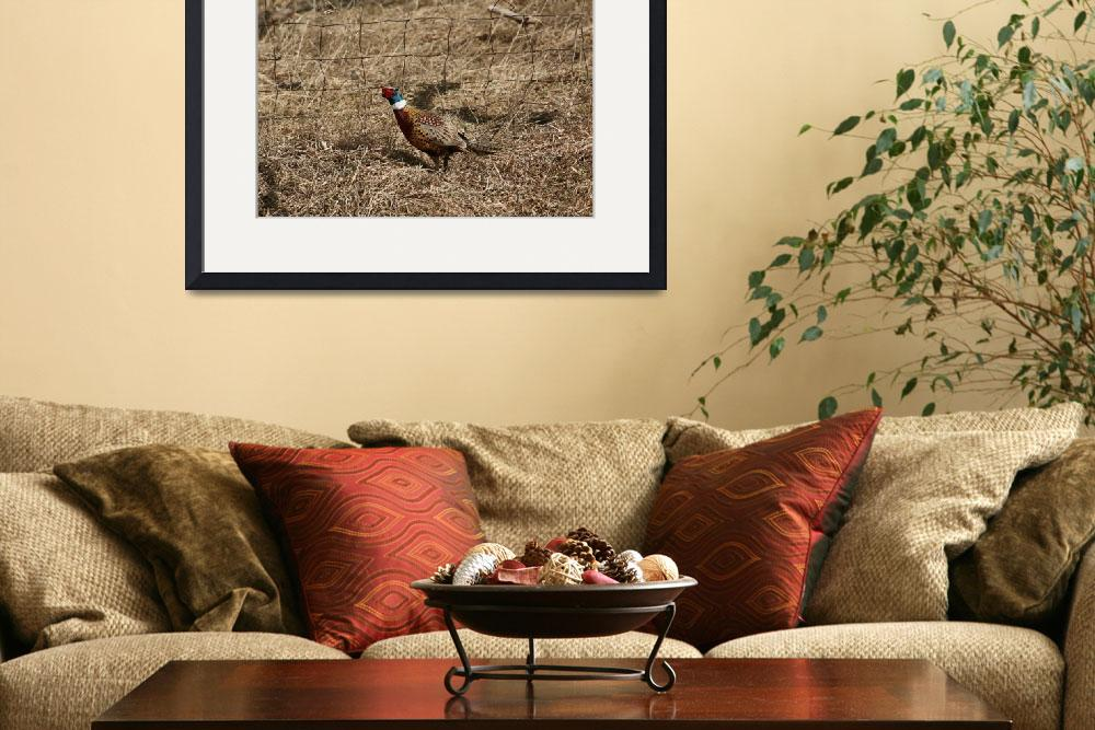 """""""Ring-neck pheasant&quot  by cameragal"""