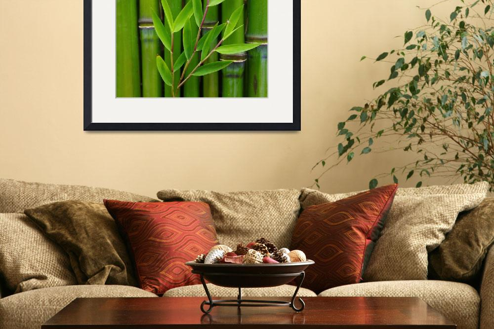 """""""Bamboo&quot  (2012) by gabii40"""