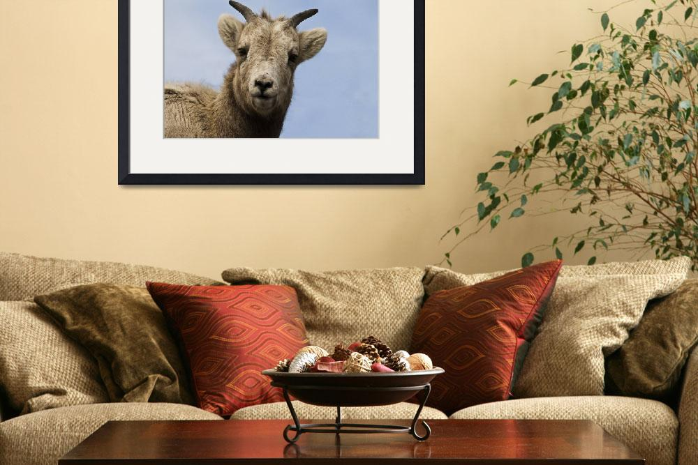 """""""Big Horn Sheep #5""""  (2010) by reved"""