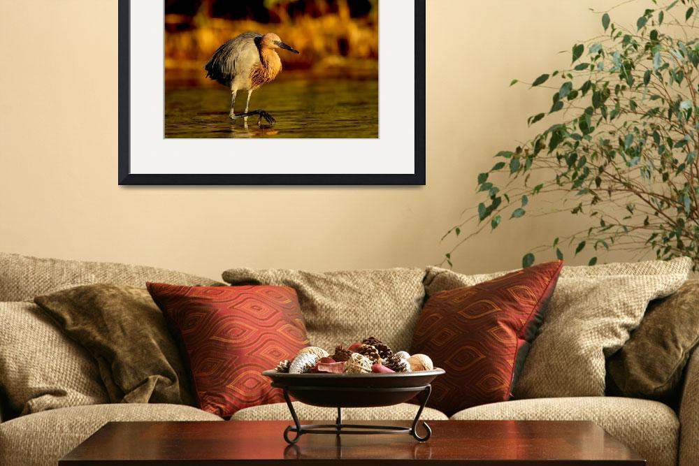 """""""Reddish Egret on the Prowl""""  by PSimmons"""