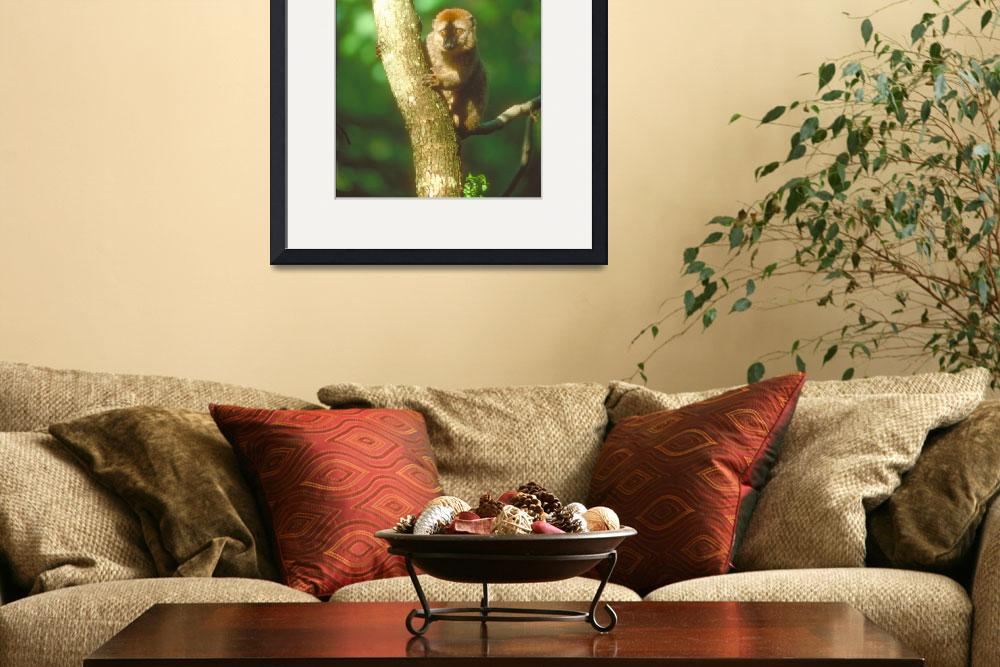 """""""Endangered Red Fronted Lemur in Tree&quot  by ArtLoversOnline"""