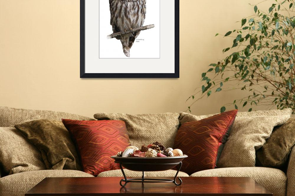 """""""Barred Owl 4757&quot  (2012) by OwlGuy"""