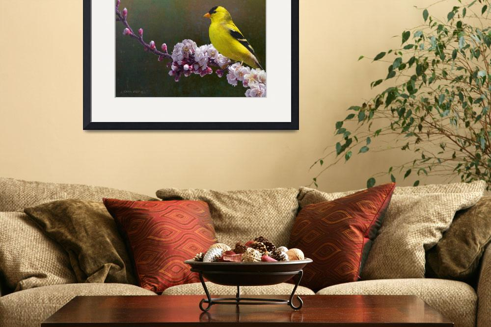 """""""rivals in color / goldfinch and blossoms&quot  (2011) by rchristophervest"""