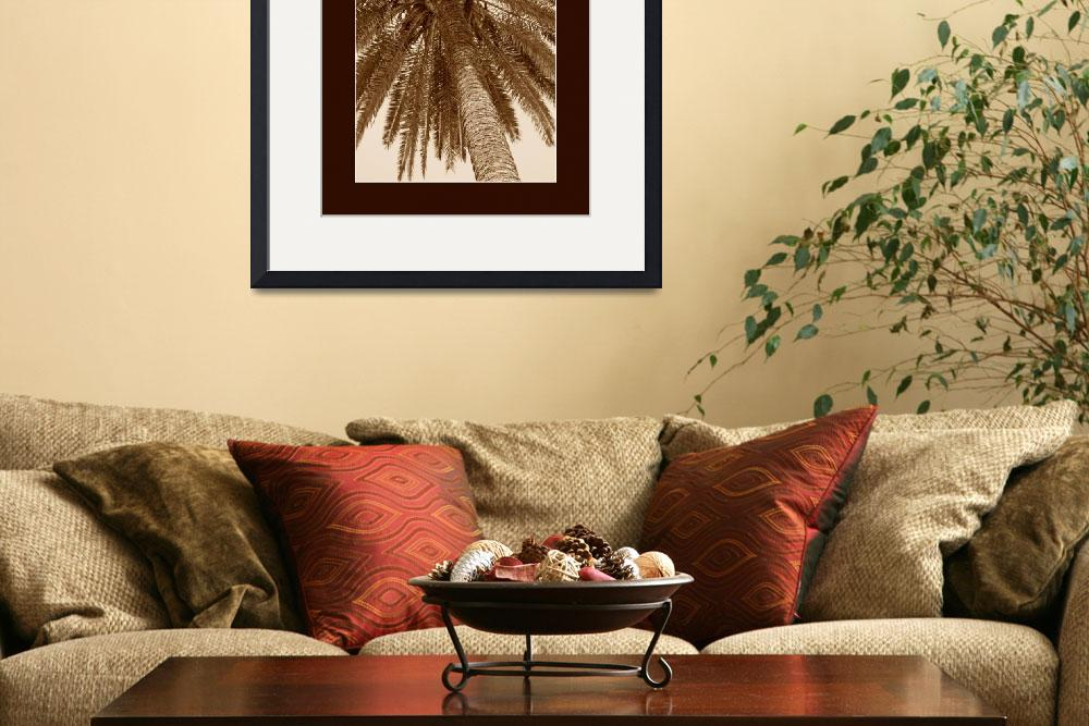 """""""Seppia colored palm tree with border&quot  (2004) by travel-photos"""