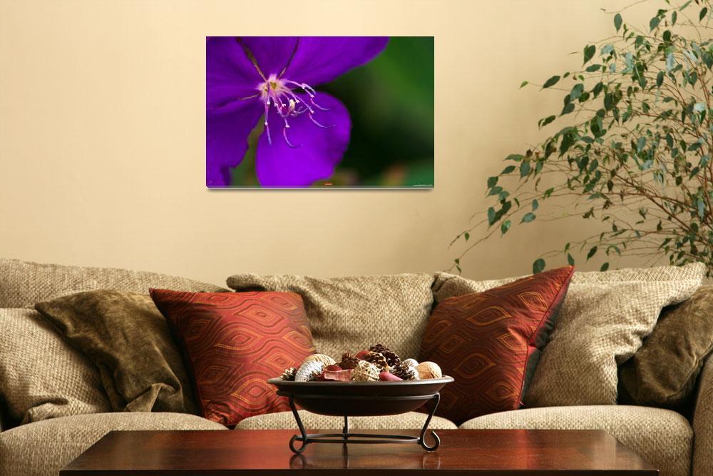 """""""Purple beauty""""  (2008) by ETicas"""