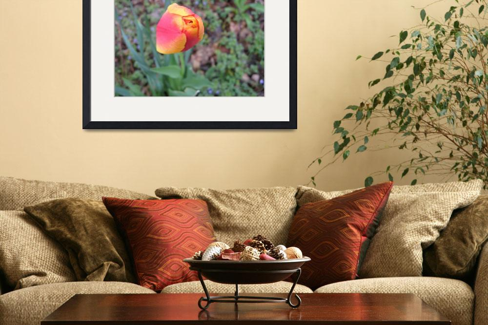 """""""First Spring Flower by Kristie Burns&quot  by imagenations"""