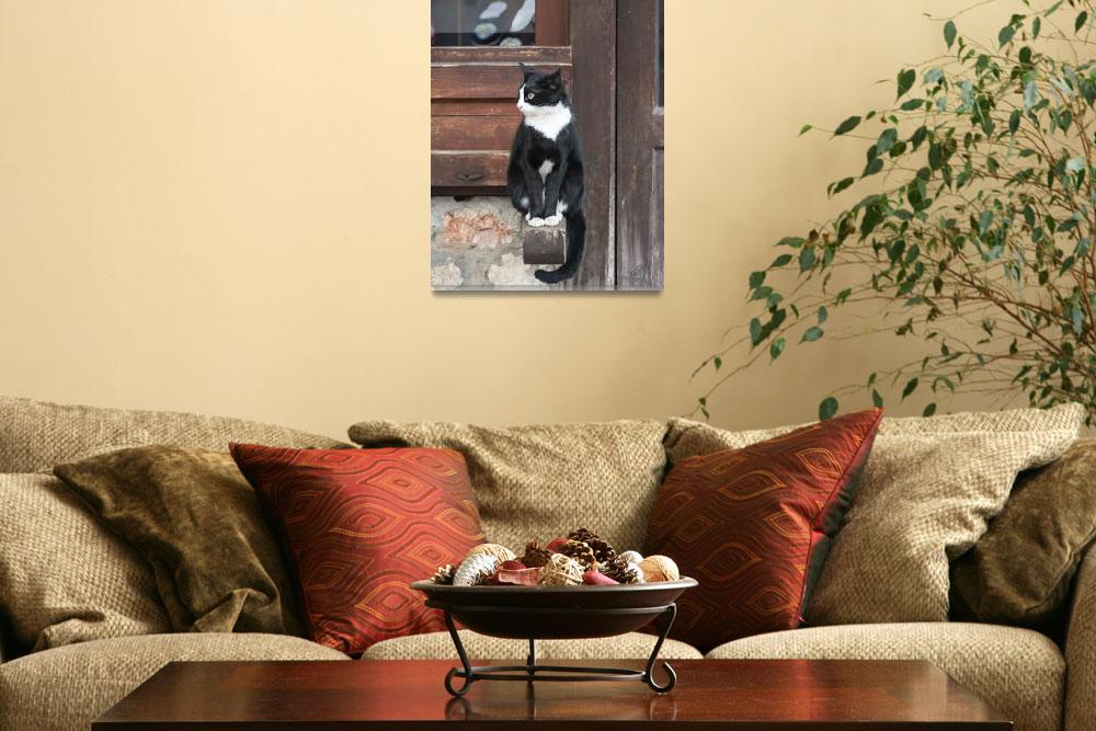 """Street cat""  (2014) by bezdan"